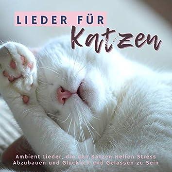 Lieder für Katzen: Ambient Lieder, die den Katzen Helfen Stress Abzubauen und Glücklich und Gelassen zu Sein