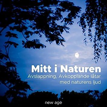 Mitt i Naturen: Avslappning, Avkopplande låtar med naturens ljud