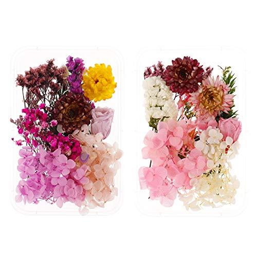 QINREN Echte getrocknete gepresste Blumen, gemischte natürliche gepresste getrocknete Blumen hinterlässt künstliche Blumen Pflanzen Herbarium für DIY Art Craft Card Making Bookmarks Scrapbooking
