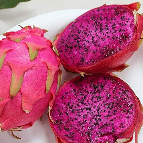 Dragon Fruit Seeds, White and Red Pitaya Seeds, 200pcs/pack#100#