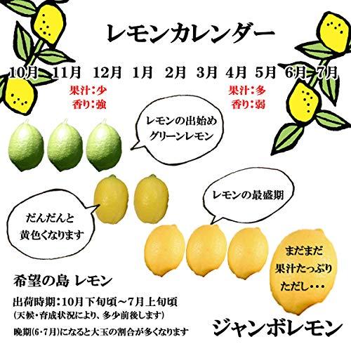 希望の島レモン1kg家庭用小玉~中玉残留農薬ゼロ国産愛媛中島産お試し