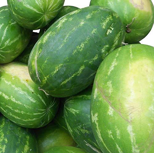 Rießen Wassermelone 10 Korn (Rar) >>>Fruchtgewicht von 12 bis 16 kg<<<
