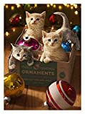 Avanti Press 702290 Avanti 10-Count Christmas Cards, Kittens in an Vintage Ornament Box