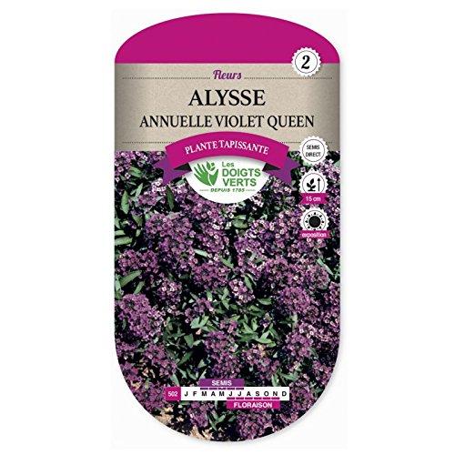 Les doigts verts Semence Alysse Annuelle Violet Queen