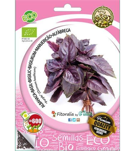 Albahaca ecológica purple - Semillas fitoralia