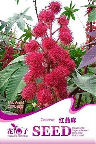 Promotion Vente chaude 300pcs insectivores Plante en pot Graines de fleurs Graines Dionaea Muscipula géant clip Dionée Seeds Novel S