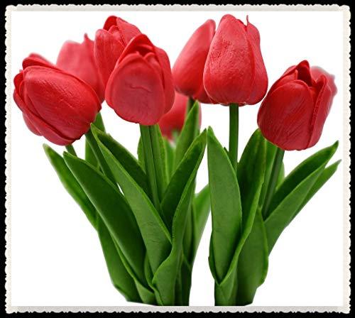 Tulipani bulbi-Bulbi da fiore, Fiori romantici Fresh Strange Flower Forte crescita Festa Aria purificante-5 Bulbi,Rosso