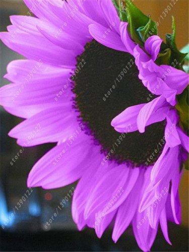 40 pcs / sac de graines de tournesol, graines de tournesol pour la plantation, les graines bonsaï de fleurs, 10 couleurs, croissance naturelle pour la maison jardin plantation