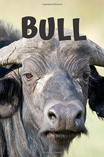 Bull: Animal Notebook, Journal, Nature (110 Pages, Blank, 6 x 9)