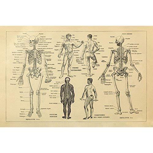 Póster Arte Retro Anatomía Humana Esqueleto Gráfico Hueso
