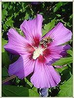 クレマチスの球根,花ゴージャスな寝具植物バルコニー魅力的な強い球根ガーデンハーディ-8球根