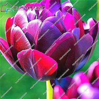 Go Garden Venta caliente Plantas de flores de alto grado Plantas de tulipanes de jardín Plantas de bonsáis Balcón Macetas Plantas coloridas Plantas no Flor Bulbos 50 piezas: Blanco