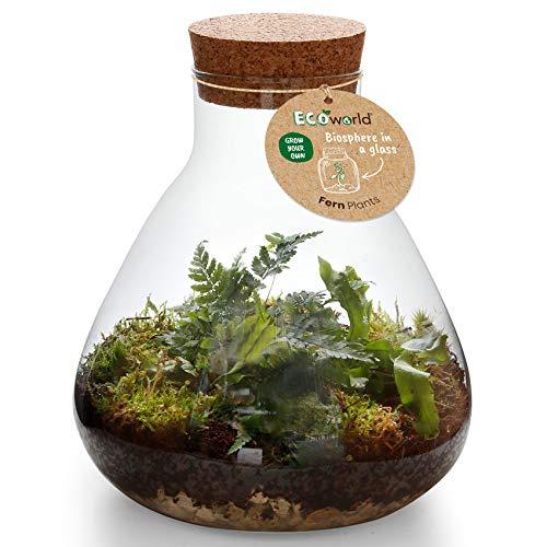 Ecoworld Jungle-Biosphäre - Ökosystem (Pyramide) mit 3 Farn-Pflanzen - Tolle Geschenkidee & Indoor-Dekoration für Wohnung & Haus - Glas: Ø: 23 cm, Höhe: 26 cm, Öffnung: 9 cm