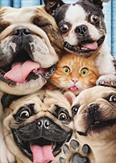 Dog/Cat Photo Booth Fun Pop Up - Avanti Stand Out Funny Birthday Card