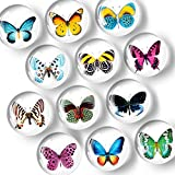 Fridge Magnets Cute Butterfly – Glass Funny Refrigerator Magnets for Whiteboard – Kitchen Decorative Magnets for Fridge – Succulent Locker Magnets for Girls and Boys