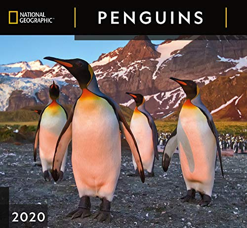 National Geographic Penguins 2020 Wall Calendar