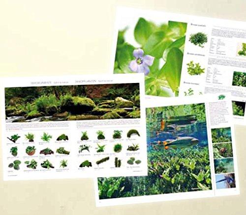 Dennerle Neu! Der Neue Pflanzen-Ratgeber, 108 Seiten mit über 400 Bild