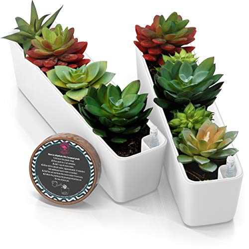 11' Plant pots self-Watering Succulent pots – Easy Succulent planters pots for Plants – Stays Perfectly watered , Planter pots Gift, 2 Pack – Water Level Indicator + Coco Coir Pellet - White