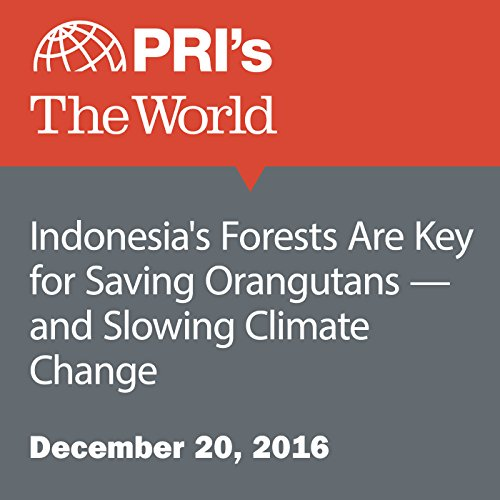 Indonesia's Forests Are Key for Saving Orangutans — and Slowing Climate Change cover art