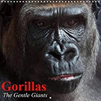 Gorillas . The Gentle Giants (Wall Calendar 2021 300 × 300 mm Square): The world's most rare and critically endangered animal species (Monthly calendar, 14 pages )