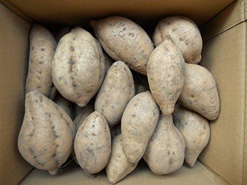 15%off 中園ファーム種子島産秀品蜜芋安納芋こがねMサイズ5kg入り