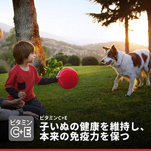 ヒルズサイエンス・ダイエットドッグフードパピー1歳まで子いぬ用子犬の発育と健康ケアチキン大型犬種用12kg