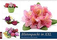 Bluetenpracht in XXL - Rhododendron und Azalee (Wandkalender 2022 DIN A2 quer): Formenvielfalt der Zuechtungen (Monatskalender, 14 Seiten )