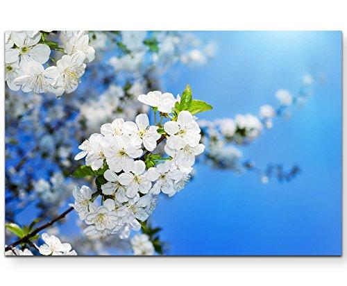 Paul Sinus Art Leinwandbilder | Bilder Leinwand 120x80cm Kirschblüten im Frühling – Fotografie