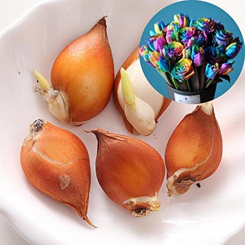 Rosepoem Rare Rainbow Tulip Ampoules Graines Belle Fleur Graine Maison Jardin Plantes Décor Bonsaï 5 Graines