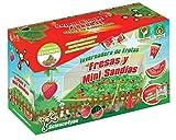 Science4you Invernadero de frutas y mini sandias