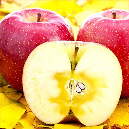 山形県産 りんご 5kg (ご家庭用/準秀品/13玉-23玉入り/やたか/昂林(こうりん)/秋陽(しゅうよう)等)