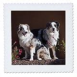 3dRose Australian Shepherd Dogs – Us03 Zmu0022 –