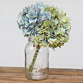 Best collecting hydrangea seeds Reviews