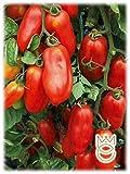 Pomodoro S. Marzano Gigante 2 Lycopersicon esculetum Semi Semenze Ortaggi Orto Giardino