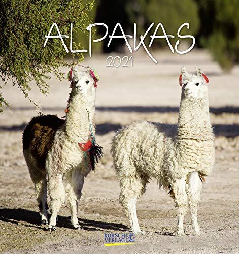 Alpakas 2021: Aufstellbarer Postkartenkalender mit Fotos von lustigen Alpakas. Format 16 x 17 cm