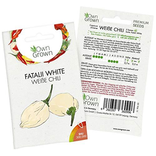 Chilisamen Fatalii White: 5 Premium Fatalii Weiß Chili Samen zum Anbau von Chili Pflanzen für Balkon und Garten – Seltene Chili Samen – Zertifizierte Fatalii Chilli Samen scharf von OwnGrown