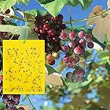 TUXUNQING 50 Piezas Fly Catcher, Trampa para Moscas,Trampa para Moscas de la Fruta trampas Adhesivas de Doble Cara, trampas para Insectos Adhesivas. (15x20 cm, Lazos de torsión incluidos)