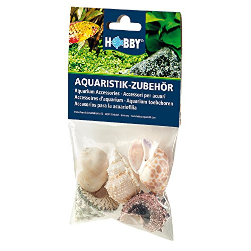 Hobby 40224 Sea Shells Set, L
