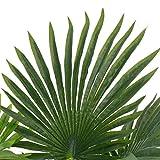 UnfadeMemory Künstliche Pflanze Palme mit Topf Kunstpflanze Grün 70 cm Kunststoff Topfpflanzen Dekoration - 2