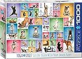 Eurographics 1000 Teile - Yoga Hunde