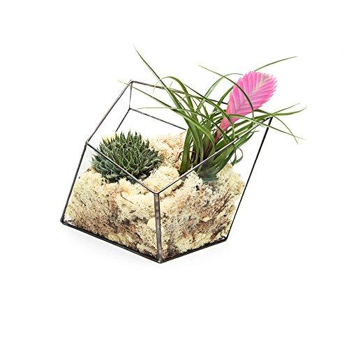 Supersize Extra Large pour terrarium – aztèque Diamant avec Live plantes artificielles Livrée montée, également disponible comme un vide Terrarium. en verre de haute qualité et de cuivre Construction L24 cm X H34 cm X W30 cm Design exclusif de géométrique Terrariums à partir de l'Urban Botaniste. élégante salle Décorations pour la maison, au bureau, les événements, arrangements de Design d'intérieur, noir, Empty - frame only