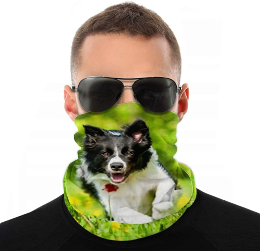 Headbands For Men Women Neck Gaiter, Face Mask, Headband, Scarf Border Collie Running On Field Dandelions Turban Multi Scarf Double Sided Print Face Mask Reusable For Sport Outdoor