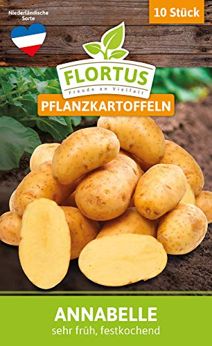 FLORTUS 2000-0398 Pflanzkartoffeln Annabelle 10 Stück I Festkochend, sehr früh I Saatkartoffeln pflanzen & anbauen I Kartoffel Saatgut I Setzlinge I Setzkartoffeln