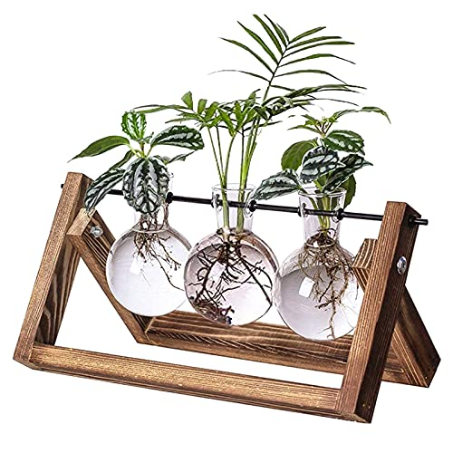 Kingbuy Glass Desktop Planter with Retro Wooden Stand and Plant Terrarium Vase