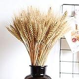 Dadahuam Weizen, Natürliche Weizen Deko Trockenblumen 100pcs Große Weizen-getrocknete Blumen-Gartenpflanzen-natürliche Primärfarben-realer Weizen Für Hochzeitsdekorationen - 8