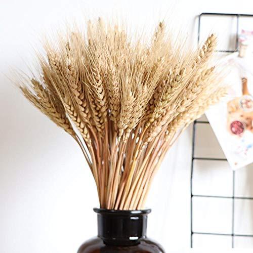 Ablerfly - 100 piezas de flores secas de trigo de gran tamaño para decoración de bodas, alta simulación, flores artificiales, estalkes, calor, flores secas de forma natural