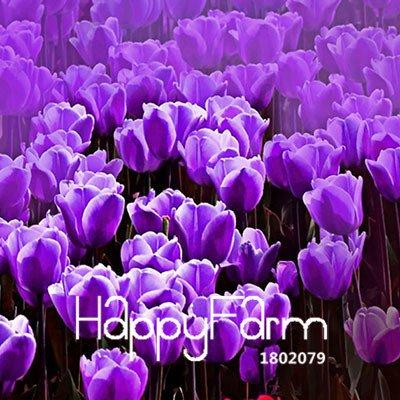 100% germination 2 Pcs véritables bulbes de tulipes, bulbes de fleurs de tulipe arc en ciel, (non tulipe graines), plantes fournitures de jardin, fleurs rares 10