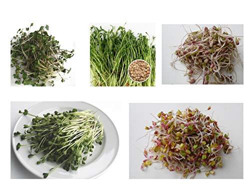 500 g BIO Keimsprossen Mischung -Spicy MIX- Keimsaat 5 x 100 g Samen für die Sprossenanzucht Senf, Linsen, Mungobohnen, Daikon-Rettich, Radies Sprossen Microgreen Mikrogrün
