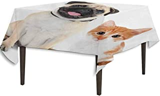 kangkaishi Pug Leakproof Polyester Tablecloth Adorable Kitten and Puppy Photography Cute Animal Fun Young Pets Happy Image Dinner Picnic Home Decor W36.2 x L36.4 Inch Cream Orange White