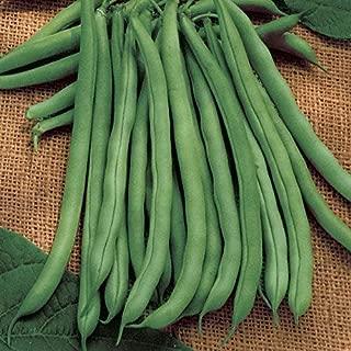 David's Garden Seeds Bean Bush Blue Lake 274 SL3085 (Green) 100 Non-GMO, Heirloom Seeds